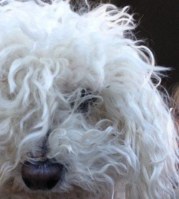 What Makes 5 Dog Farm… 5 Dog Farm?