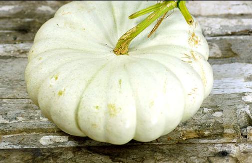 flat white boer pumpkin