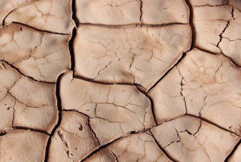 dry cracked earth 5 dog farm