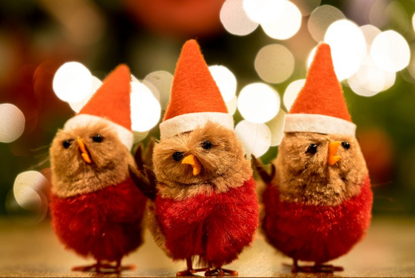 three brown baby chicks in Santa suits
