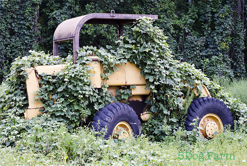tractor being taken over by kudzu vine