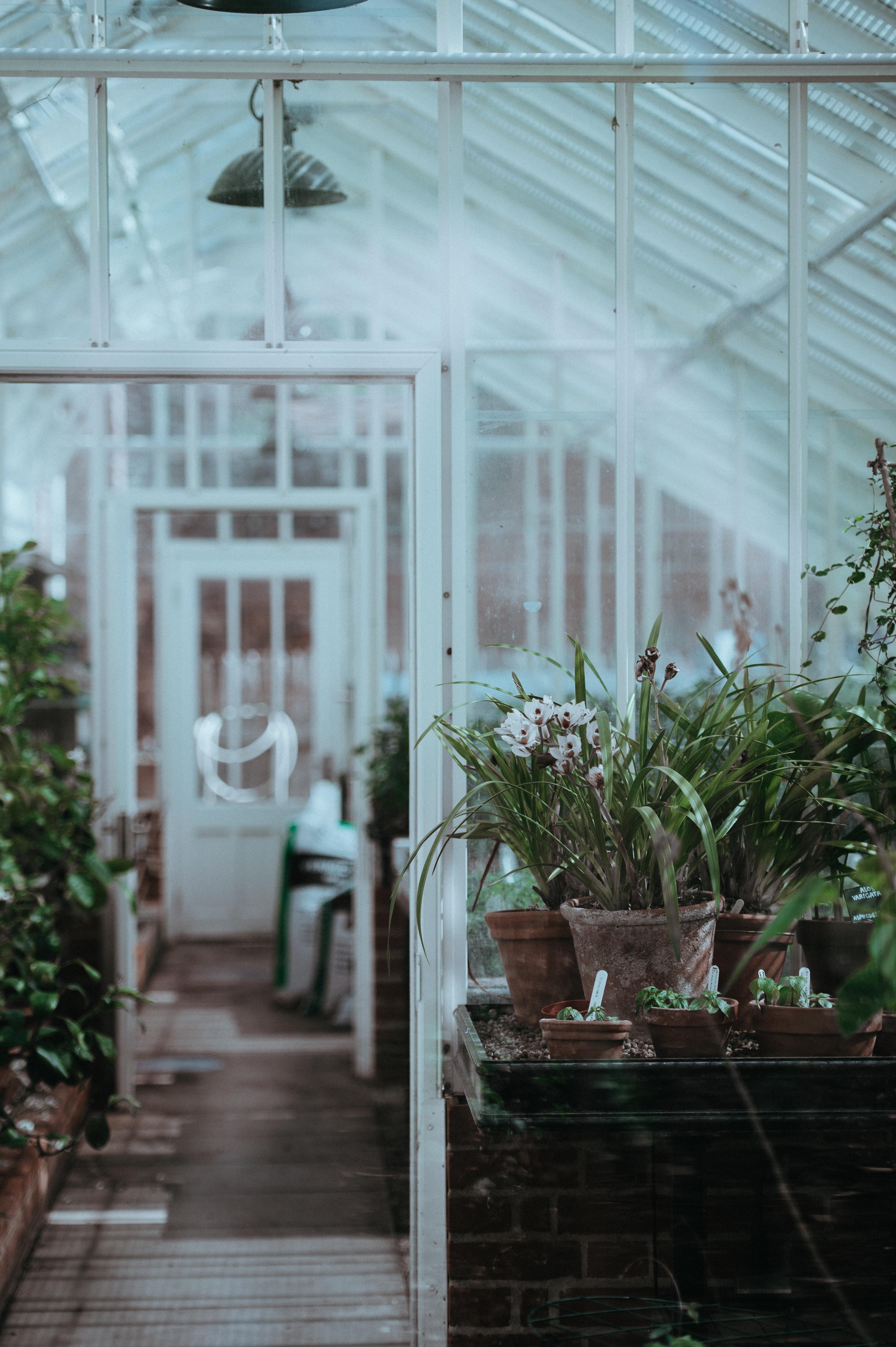 Dream Greenhouse