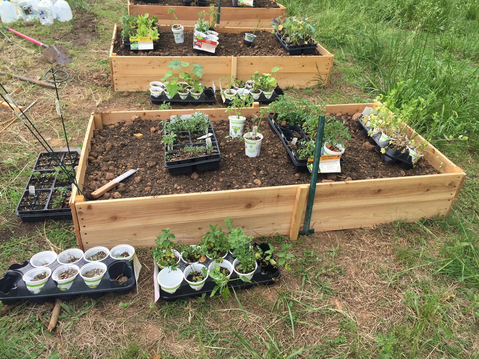 raised bed planter 5 dog farm