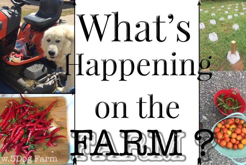 what's happening september 2018 5 dog farm
