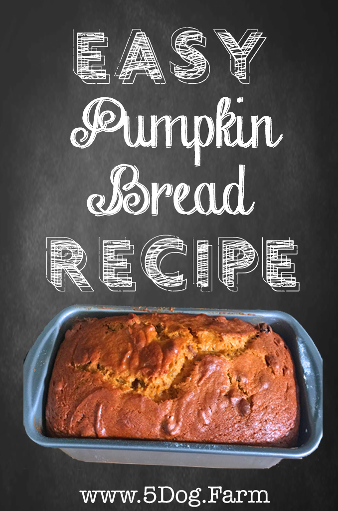 pinterest pumpkin bread 5 dog farm