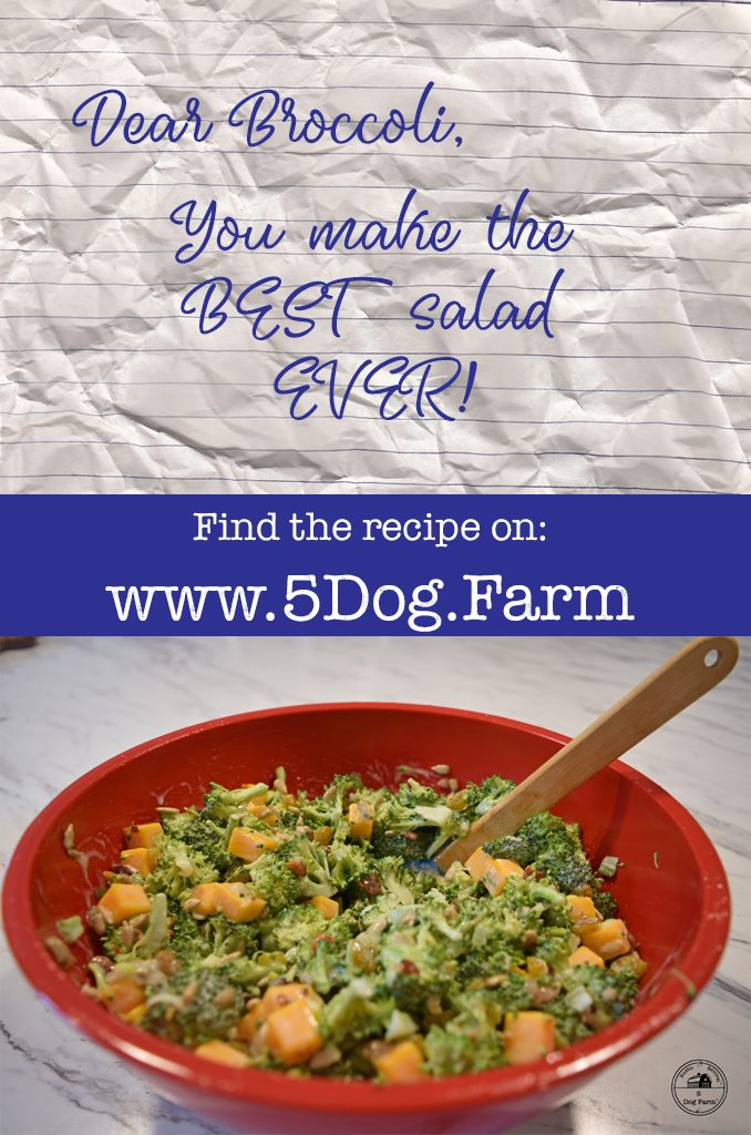 Make The BEST Broccoli Salad Ever! 5 Dog Farm