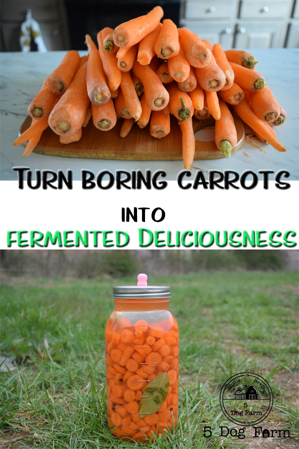 Super Easy Fermented Carrots by 5Dog.Farm