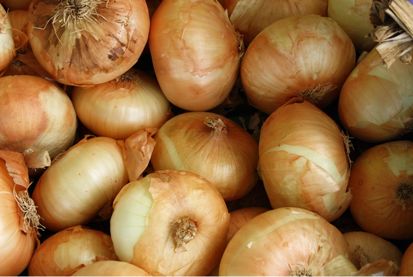 table full of onions 5Dog.Farm