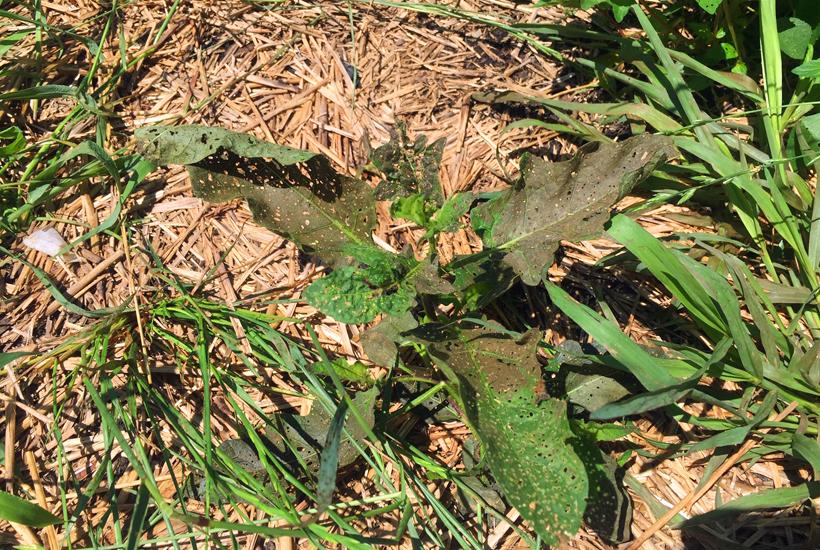 dead weeds 5DogFarm