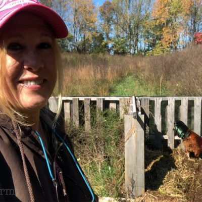 5DogFarm chickens in composter