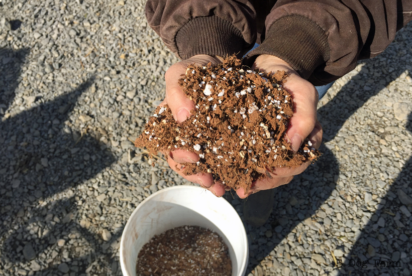 DIY Seed starting mix held in hands
