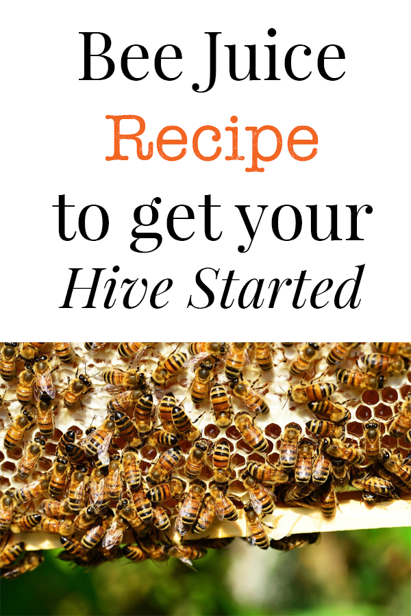 starter recipe for bees