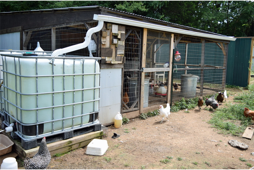 guinea hen coop with IBC water system
